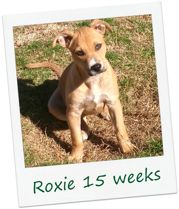 ROxie_cover.jpg