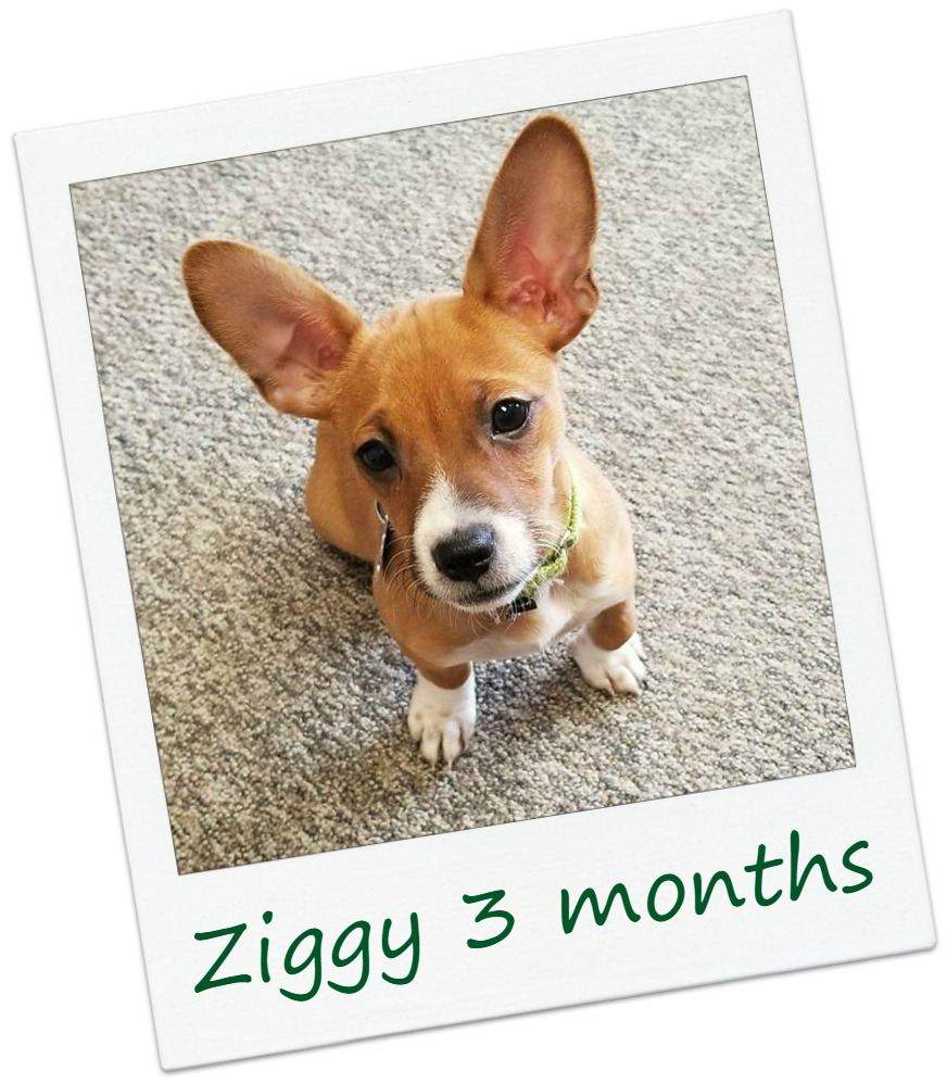 ziggy23Cover.jpg