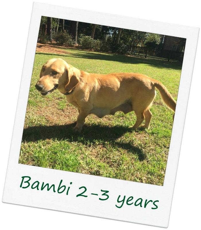 bambiCover.jpg