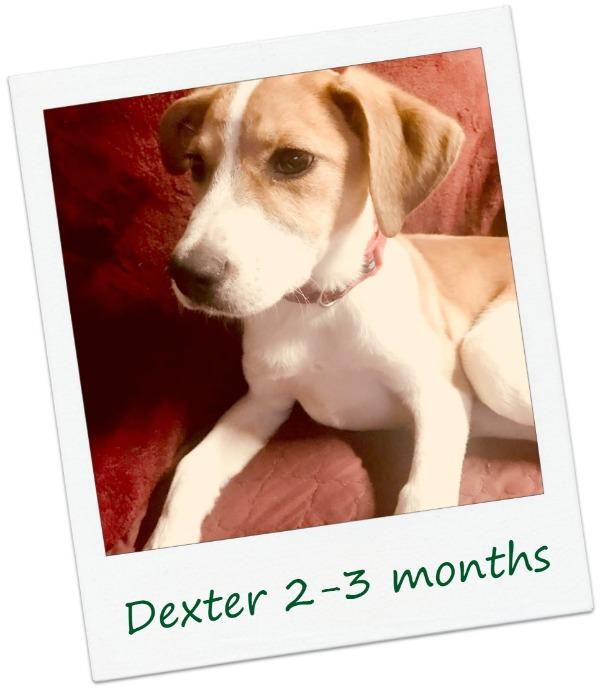 DexterF2C0ver.jpg