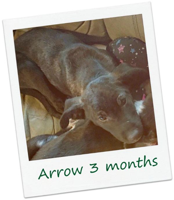 Arrow22b5.jpg
