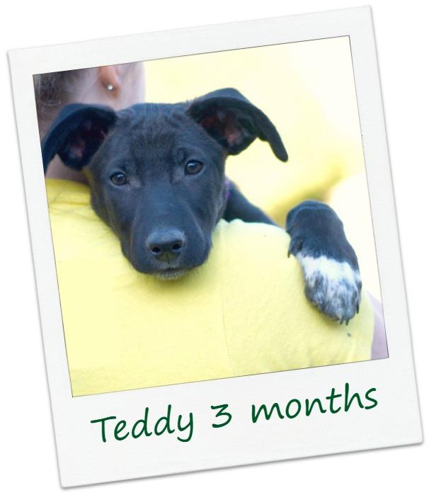 TeddyF3B_COver.jpg