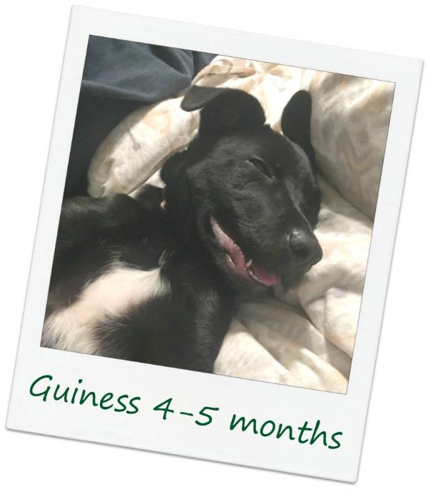 Guiness4_COver.jpg