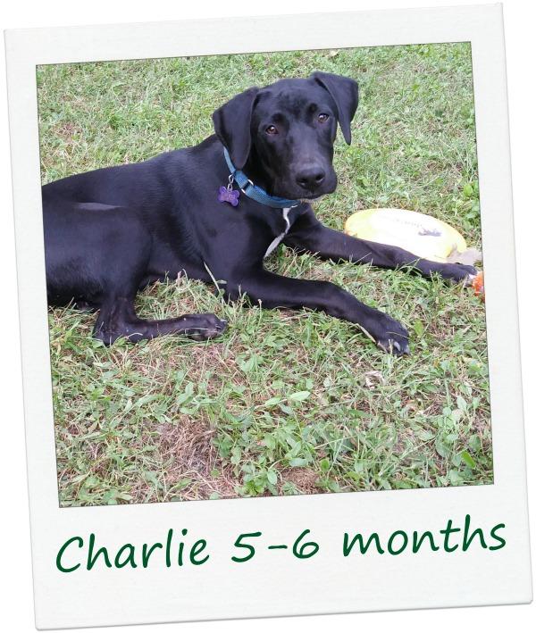 Charlie2_Cover2.jpg