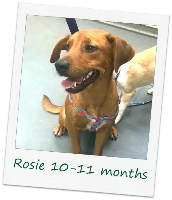 Rosie_COver22.jpg