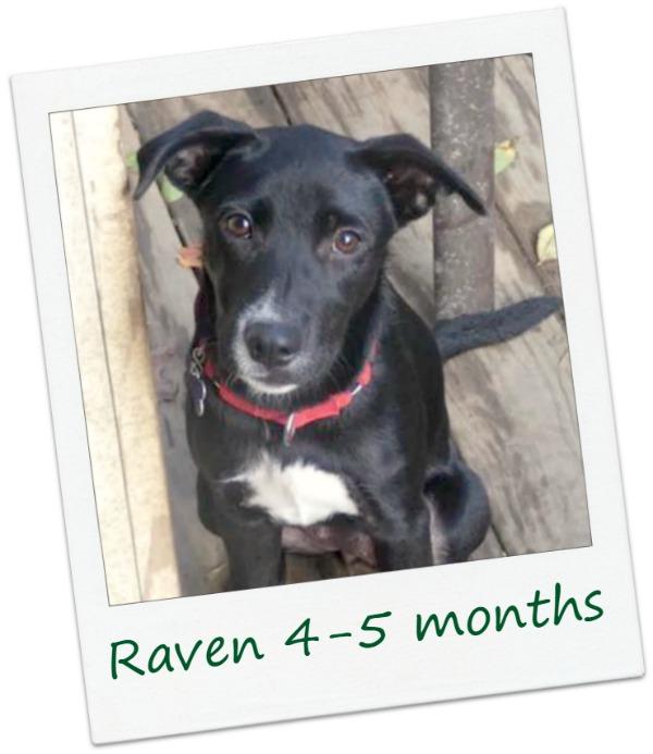 Raven22_Cover.jpg