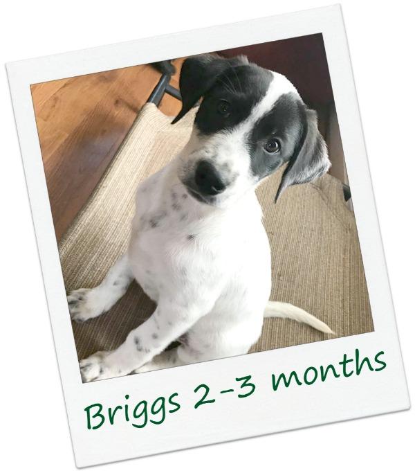 Briggs_Cover4.jpg