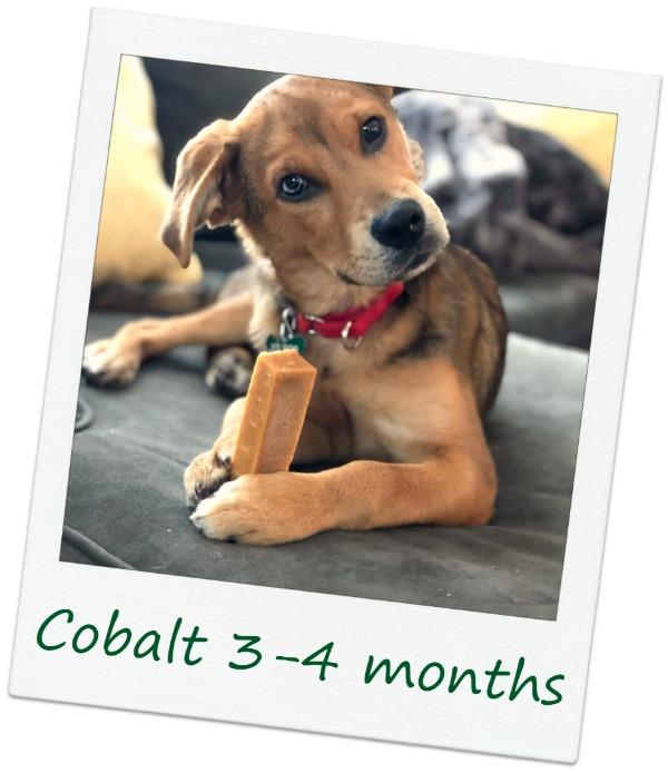 cobalt7_Cover.jpg