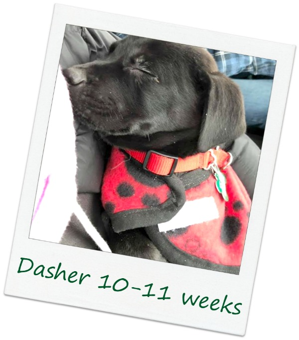 Dasher2_Cover.jpg