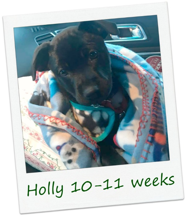Holly1_Cover.jpg