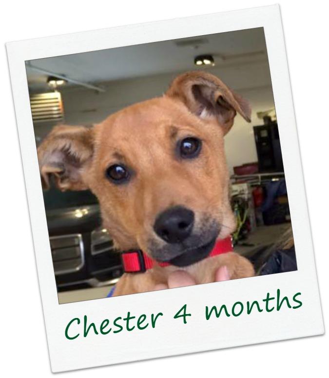 Chester4_Cover.jpg