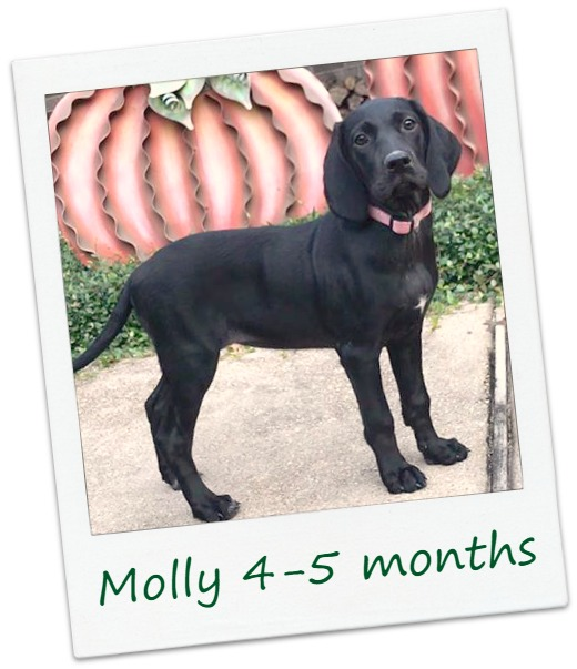 MollyF1_COver.jpg