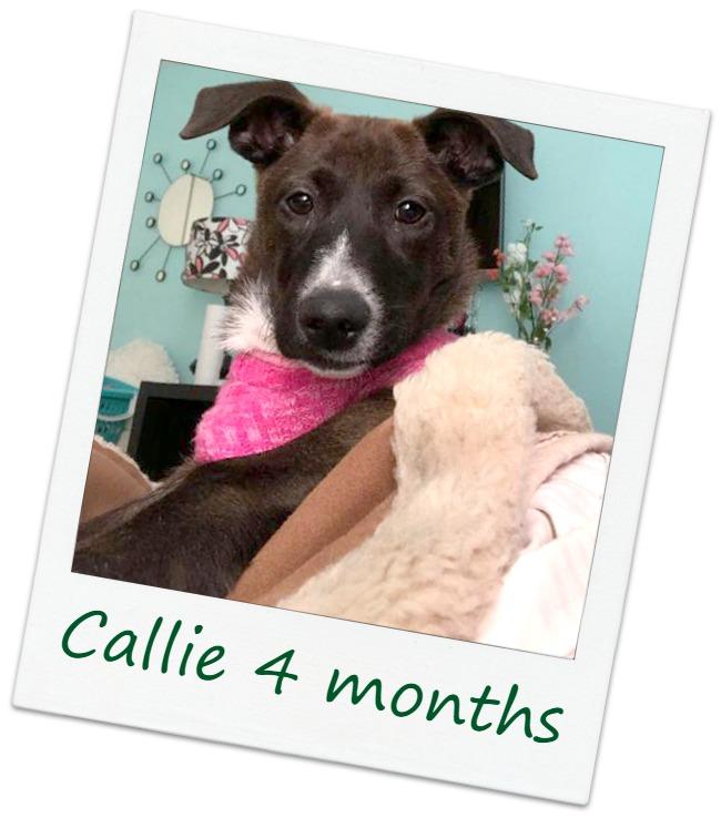 CallieF2_Cover.jpg