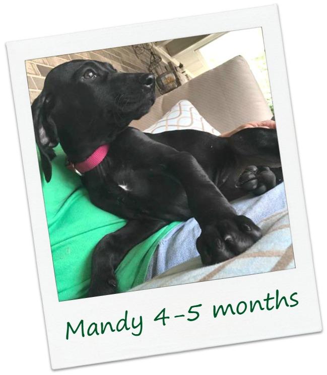 MandyF5_COver.jpg