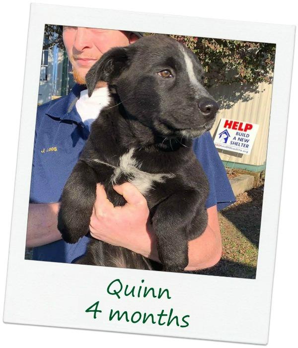 Quinn_Cover.jpg