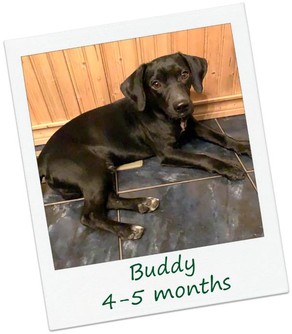 Buddy_CoverF2.jpg