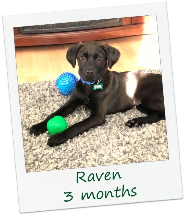Raven_Cover4.jpg
