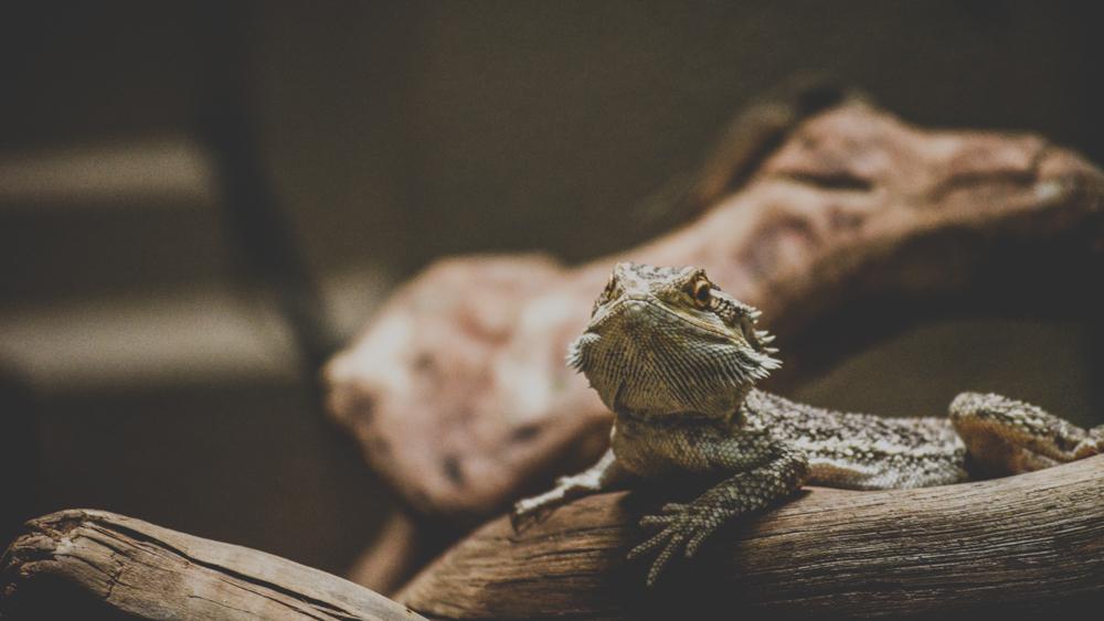 Mancipe Fotografia©-Naturaleza5.jpg