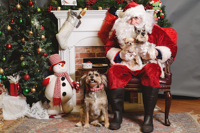 Paws with Santa Claus
