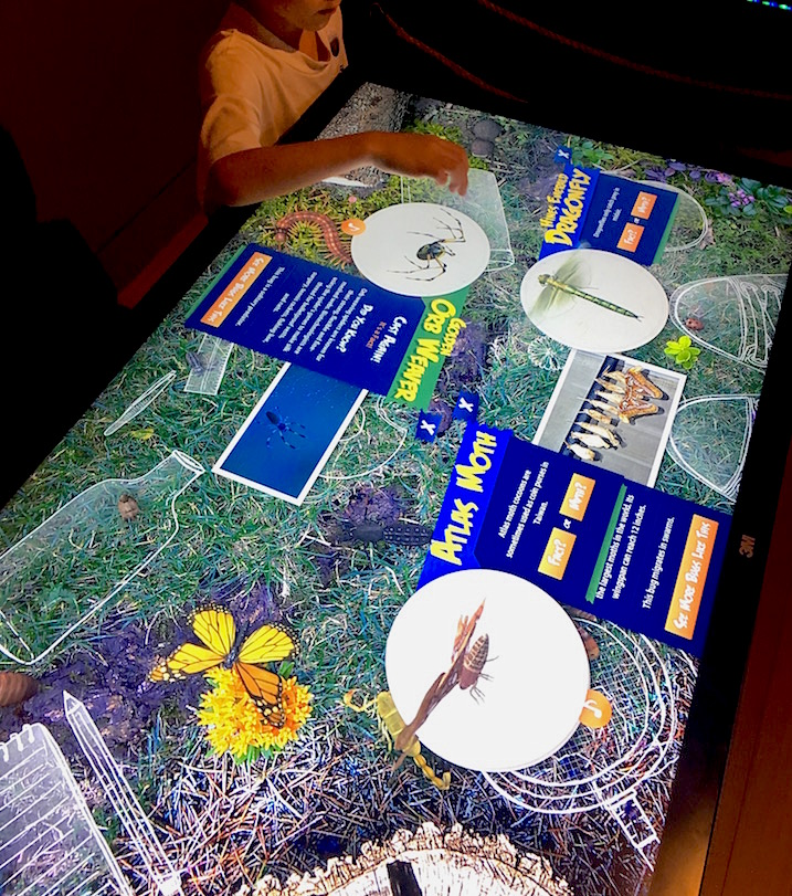 Interactive bug board