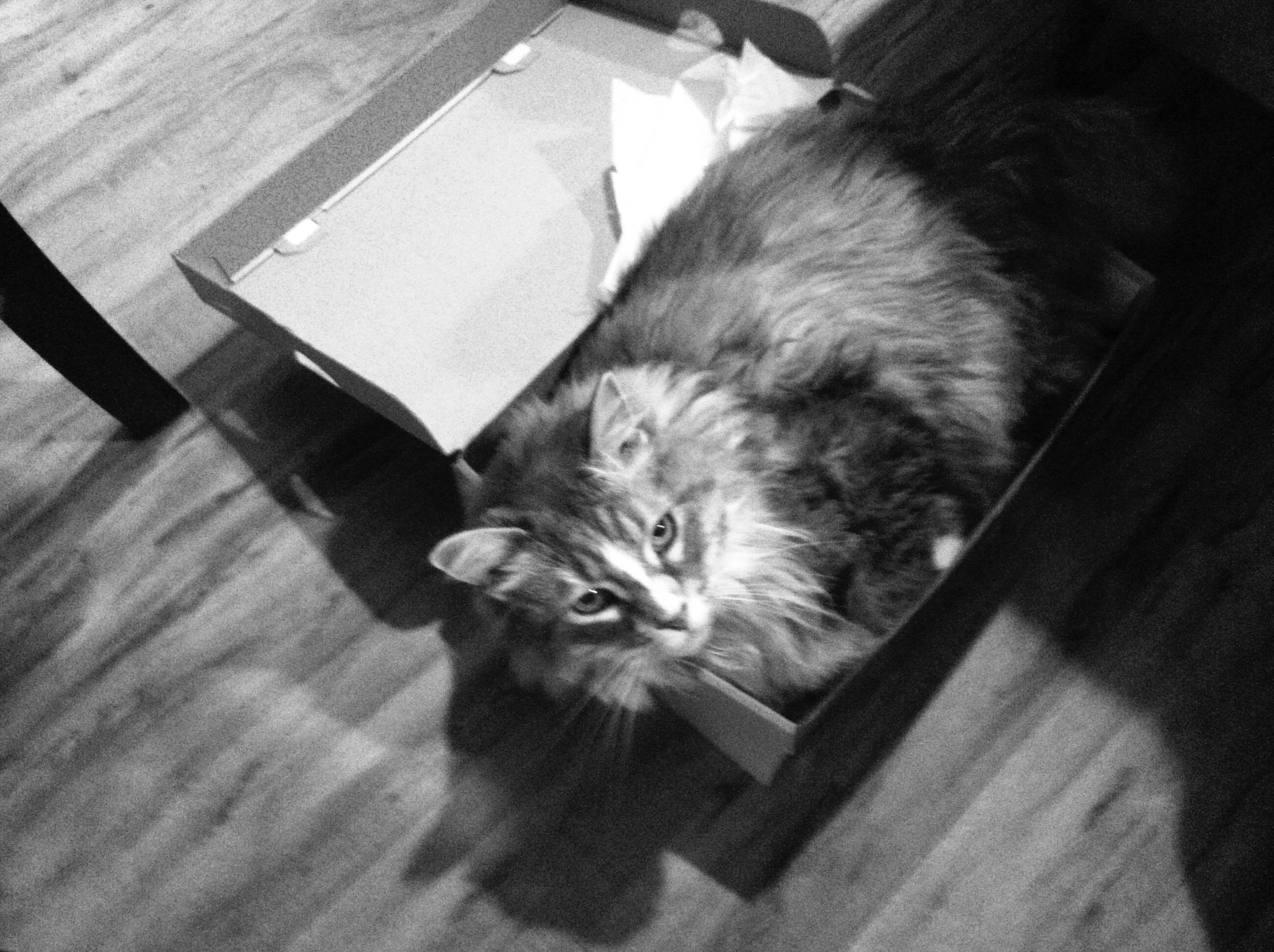 Zooey in a shoebox// Thrifted