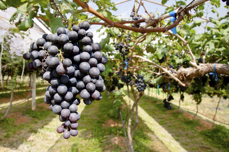 Wineosphere.com.au