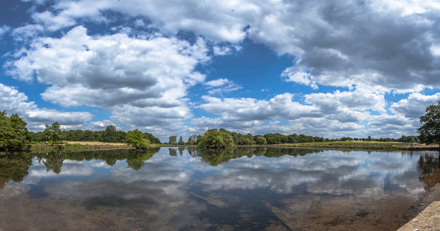 Background shot in Richmond Park , England  - Panorama made of 3 images shot with canon 17mm