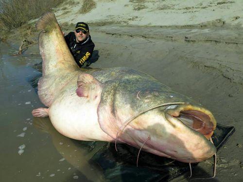 Bigfish04