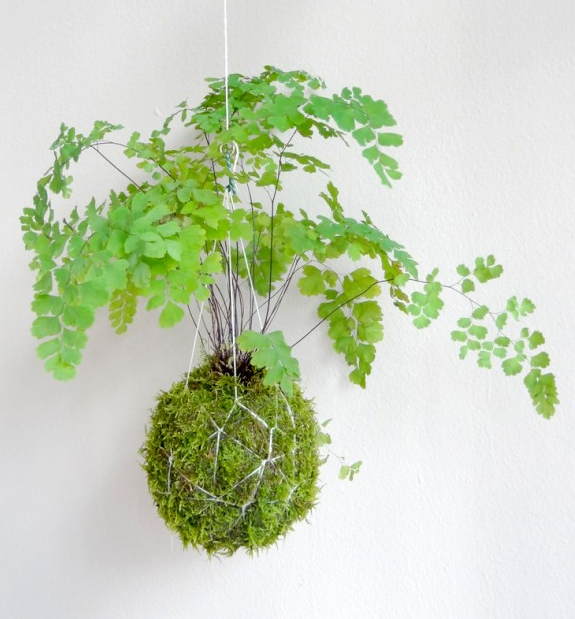 DOTTED LINE will offer some quick and affordable Kokedama workshops makes your own Kokedama. Each session lasts 1 hour and all materials are provided. Just pick a time that suits you and book your spot! To avoid disappointment book HERE