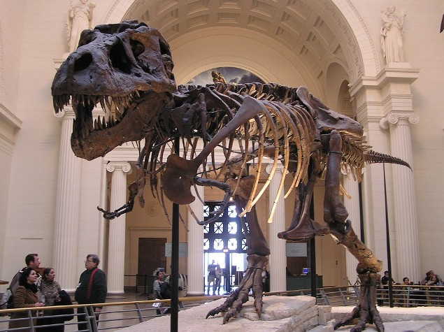 Sue the Dinosaur at the Field Museum.