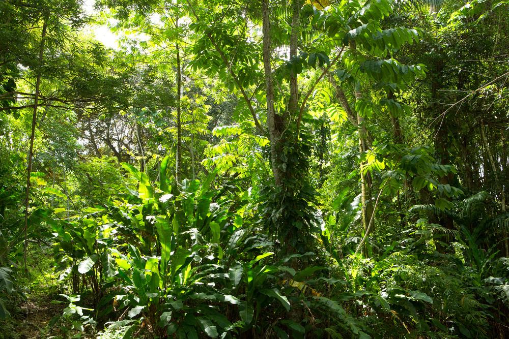 Jungle I, 2013