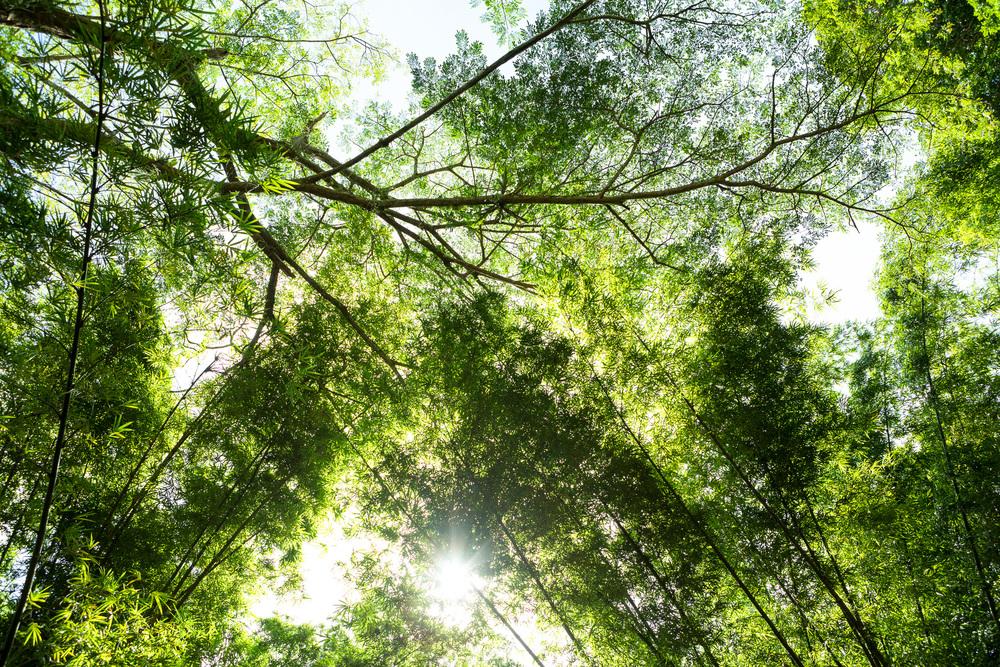 Jungle II, 2013.jpg