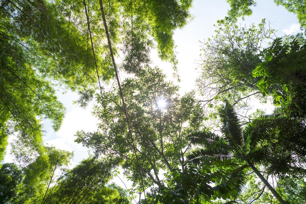 Jungle III, 2013.jpg