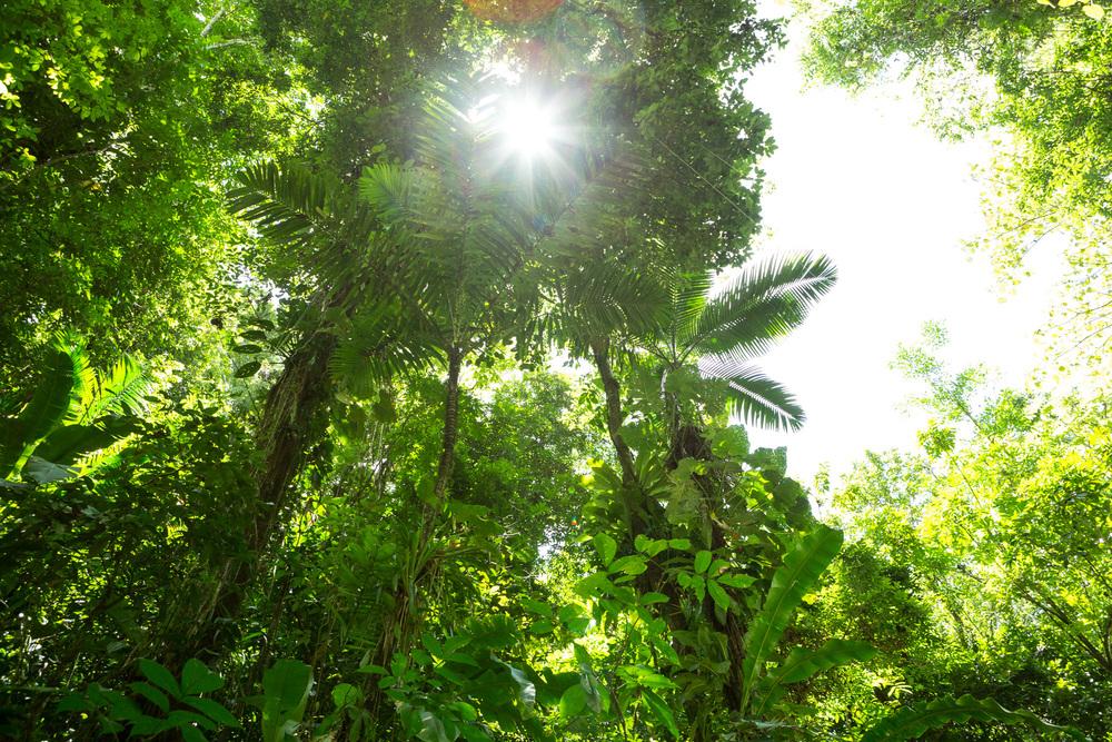 Jungle VI, 2013.jpg