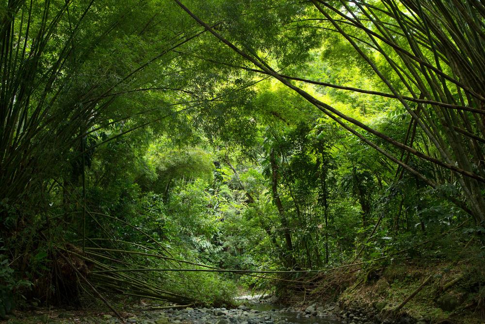 Jungle VIII, 2013