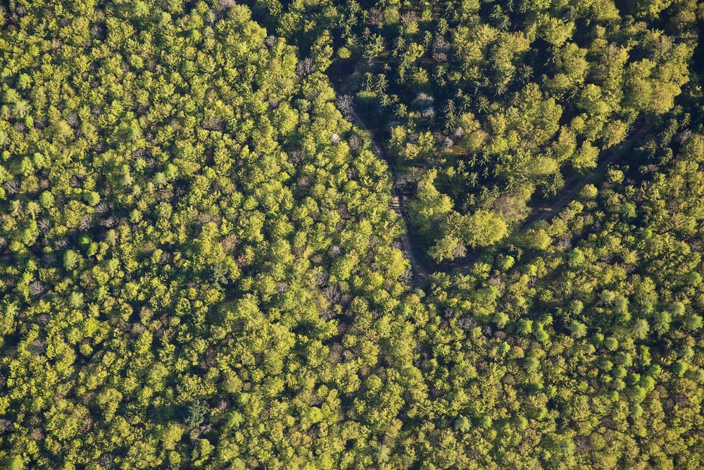 Treetops I, 2016.jpg