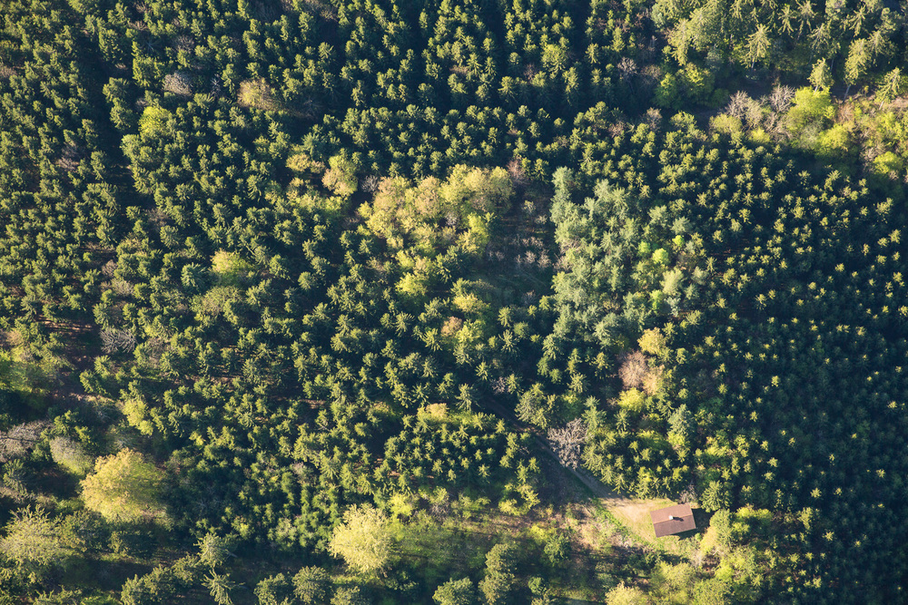 Treetops III, 2016