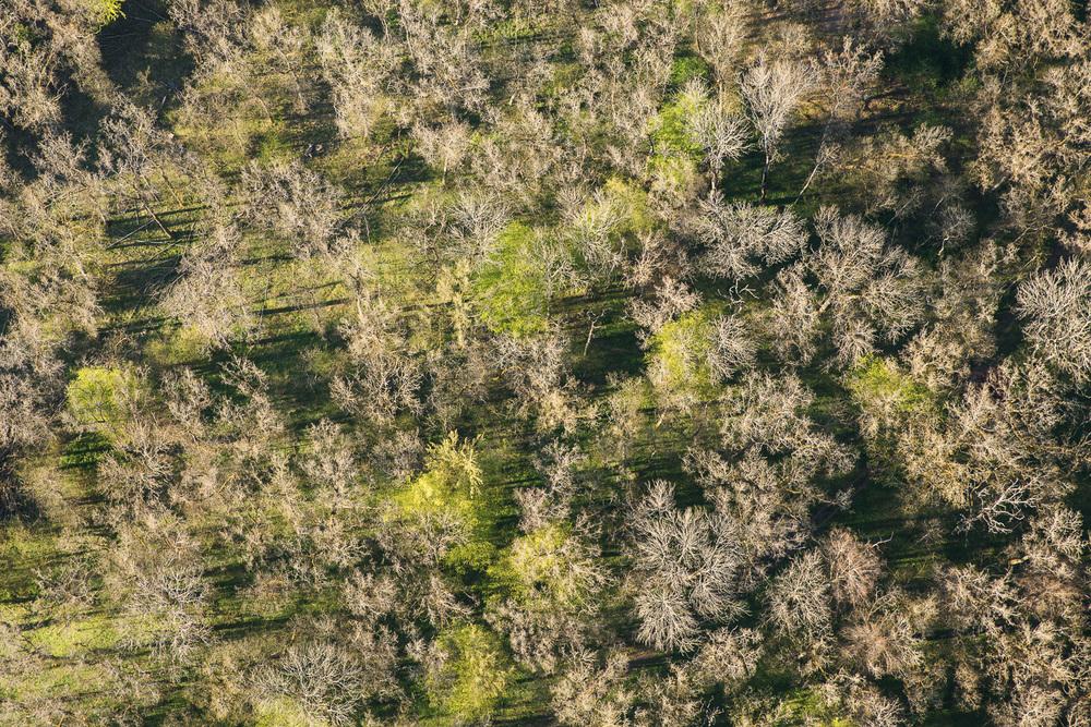 Treetops - Survey #2, 2016