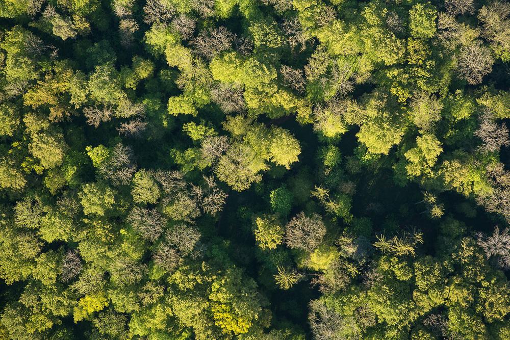 Treetops - Survey #1, 2016.jpg