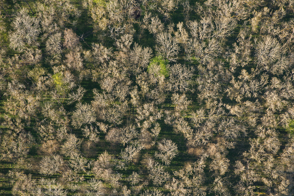 Treetops - Survey #3, 2016