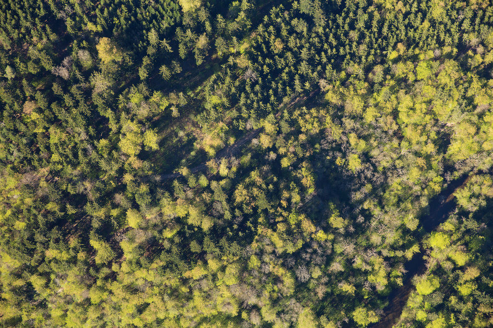 Treetops II, 2016 //  80 cm x 120 cm