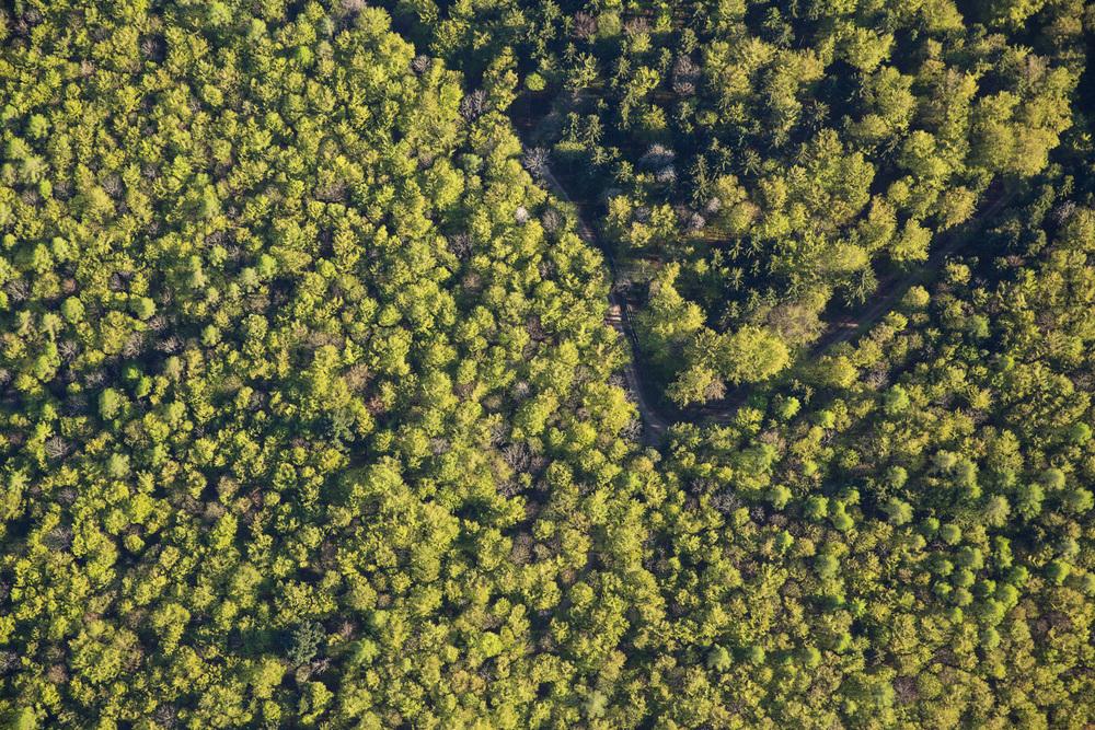 Treetops I, 2016 //  80 cm x 120 cm