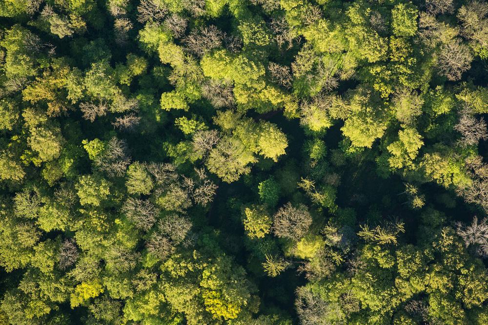 Treetops - Survey #1, 2016 //  80 cm x 120 cm