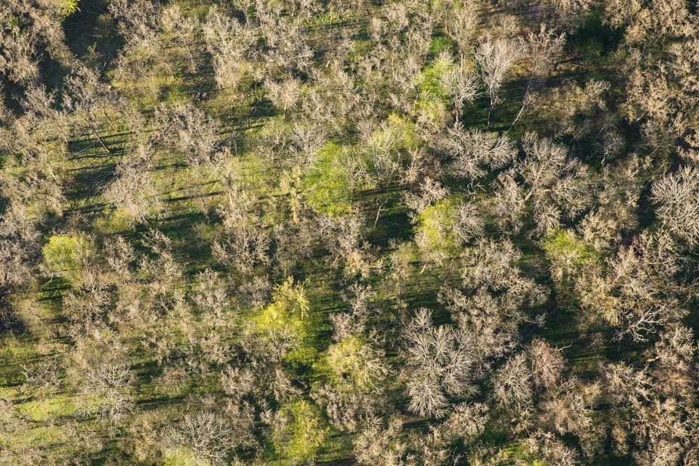 Treetops - Survey #2, 2016 //  80 cm x 120 cm