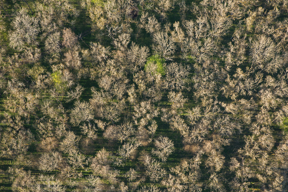 Treetops - Survey #3, 2016 //  80 cm x 120 cm
