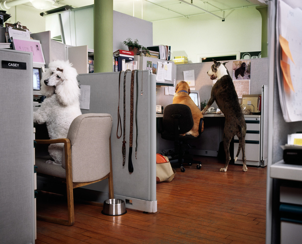Dog Office