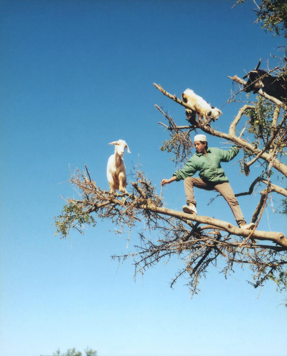 Goat Herder, Morocco