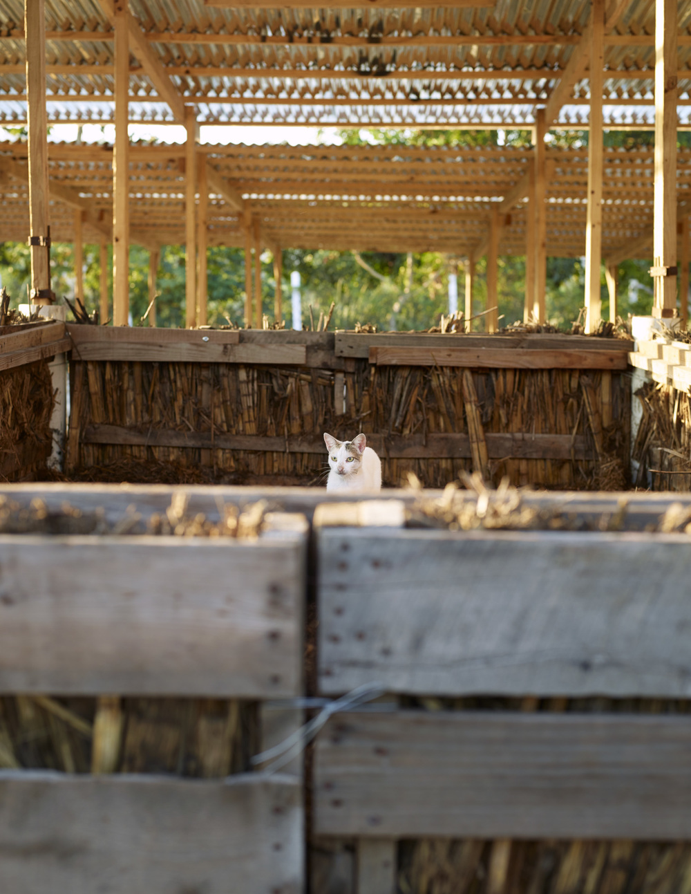 A cat atop a compost bin at SOIL's Mouchinette treatment center, Cap-Haitien, Haiti.