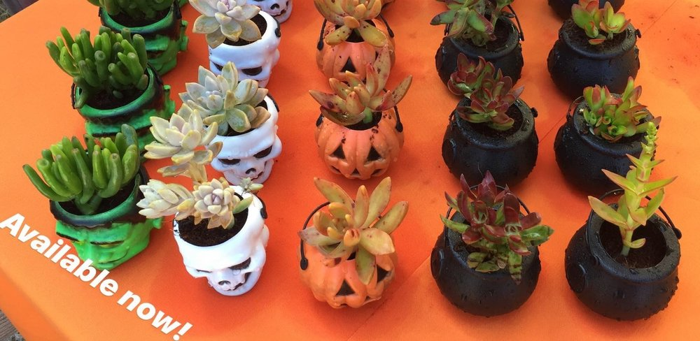 Halloween Succulent Planters. Available at our nursery now! $3 ea. or 2/$5.