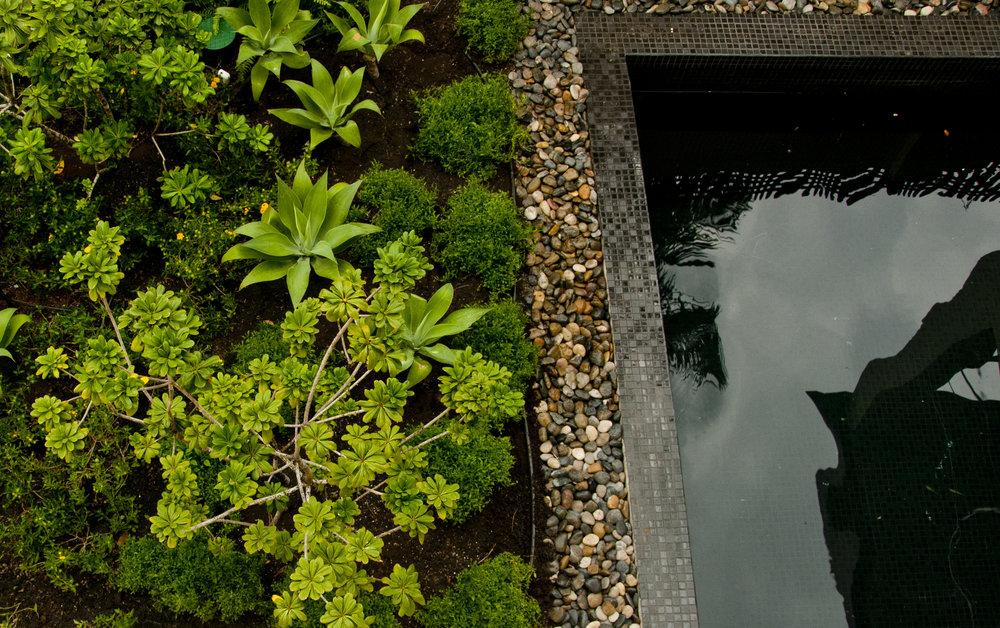 Cresolus design 2013, Landscape by El Tigre Verde (eltigreverde.com)